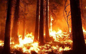 «Бессмысленное» тушение пожаров на половине территории лесов страны может быть переосмыслено