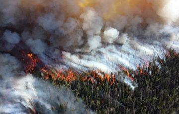 Площадь лесных пожаров в России выросла в 5 раз за неделю