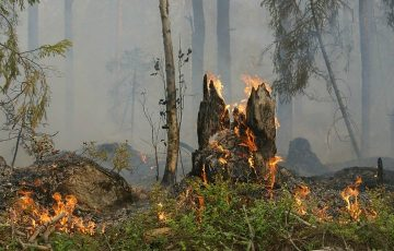 Экологи предрекли Сибири в 2020 году «пожарную катастрофу»