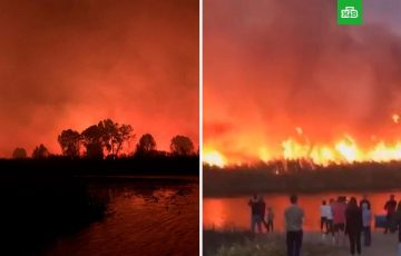 Ситуацию с природными пожарами в Воронежской области назвали самой масштабной за все время